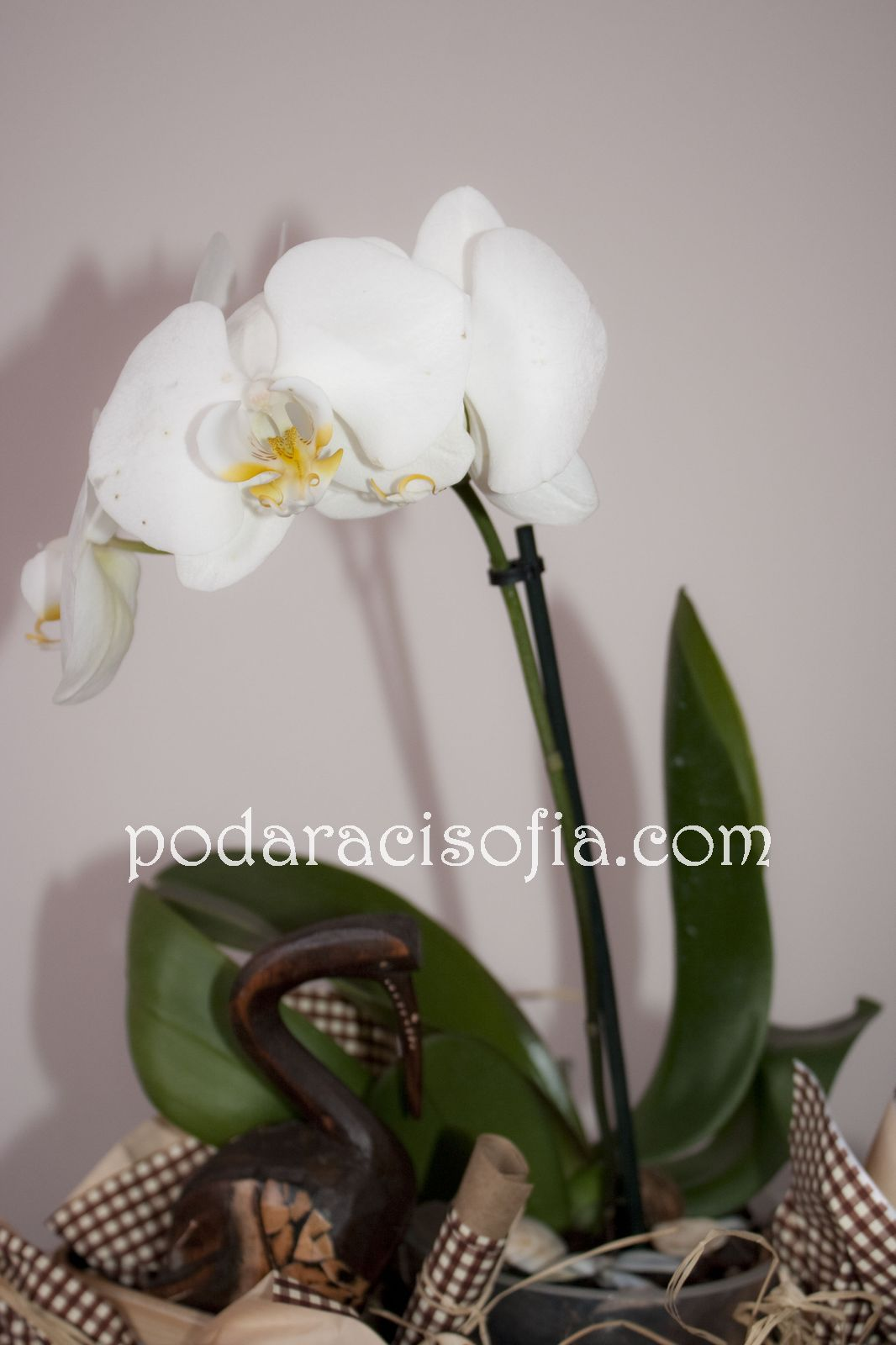 Бяла орхидея  - в центъра на подаръка