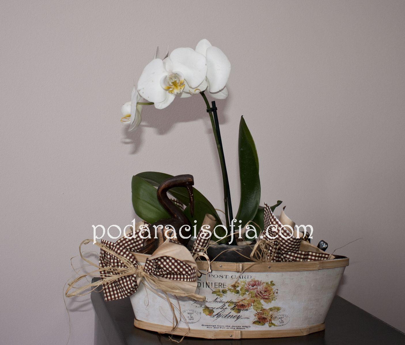 Бяла орхидея в красива дървена поставка с още няколко скрите детайли - идея за завършен подарък от Gifts